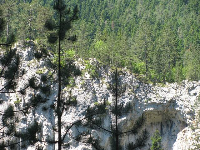 гората преди харамийска пещера